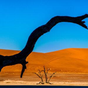 デッドフレイ|ナミビア|ナミブ砂漠|南部アフリカ旅行