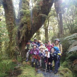 温帯雨林を歩く