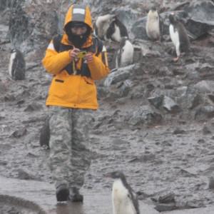 ペンギン 南極上陸 南極クルーズ船 南極・南極上陸クルーズ旅行@ブループラネットツアー