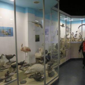 世界の果て博物館 ウシュアイア 南極クルーズ船 南極・南極上陸クルーズ旅行@ブループラネットツアー