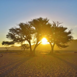ドューン45 南部アフリカ旅行@ブループラネットツアー
