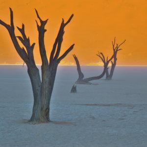 デッドフレイ ナミブ砂漠 南部アフリカ旅行@ブループラネットツアー