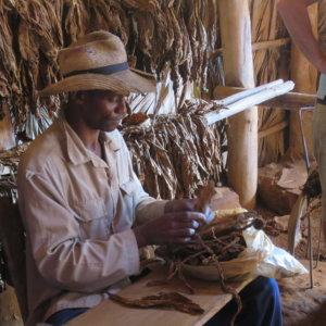 キューバの葉巻工場|キューバ・世界遺産旅行@ブループラネットツアー
