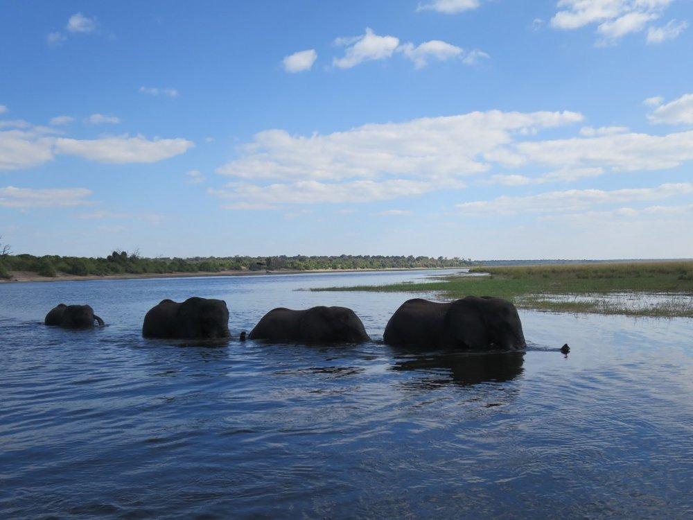 チョベ国立公園|象|南アフリカ旅行@ブループラネットツアー