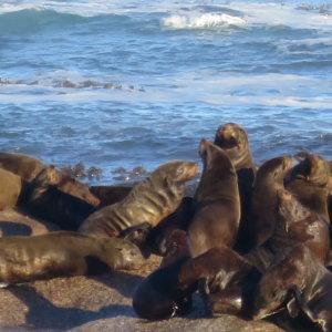 ドイカー島|南部アフリカ旅行@ブループラネットツアー