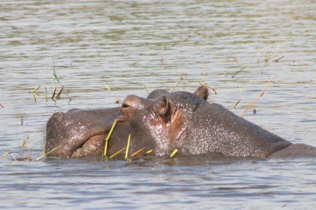 ボツワナ|チョベ国立公園|南部アフリカ旅行@ブループラネットツアー