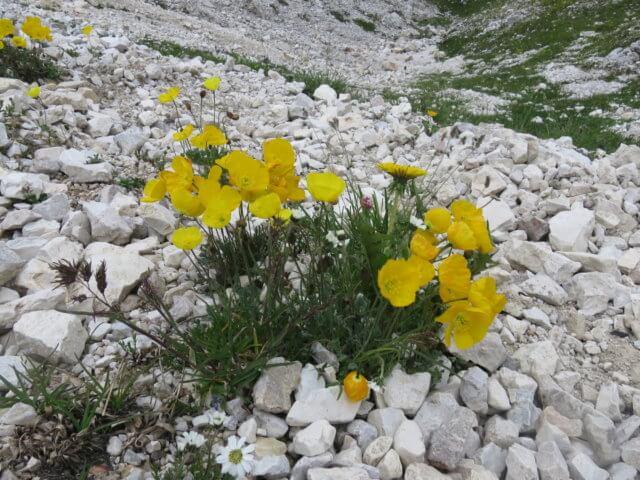 ドライチンネンの花々