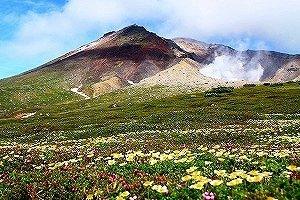 大雪山のお花畑