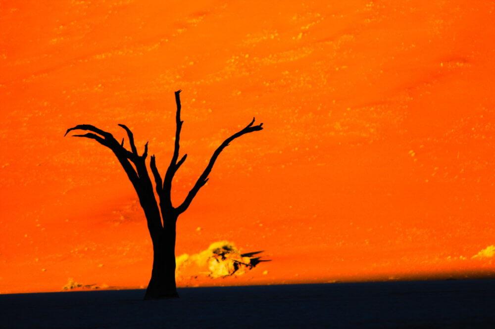 デッドフレイ|ナミブ砂漠|ナミビア|南部アフリカ旅行@ブループラネットツアー