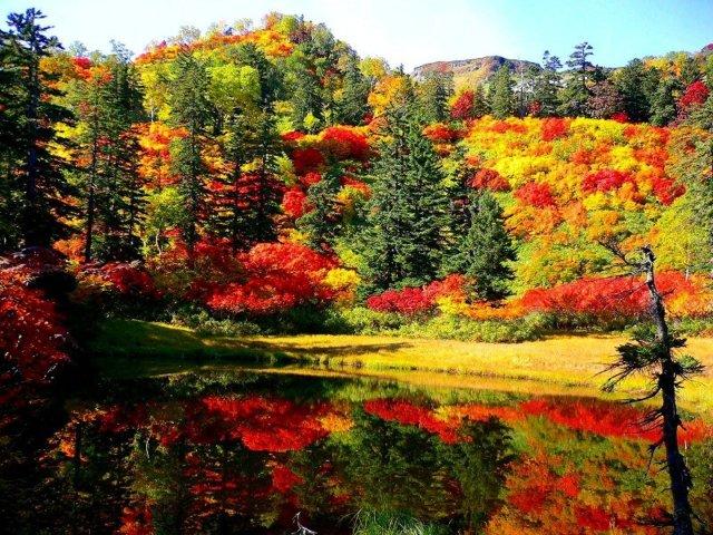 紅葉の大雪山