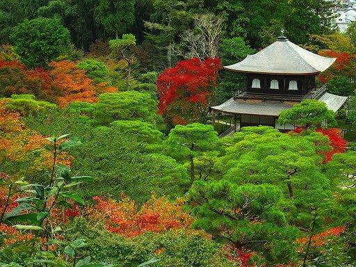 紅葉の京都一周ツアー@ブループラネットツアー
